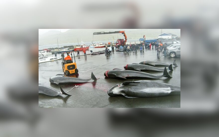 EP: Europa pradės derybas su Islandija, bet ši turi sustabdyti banginių medžioklę