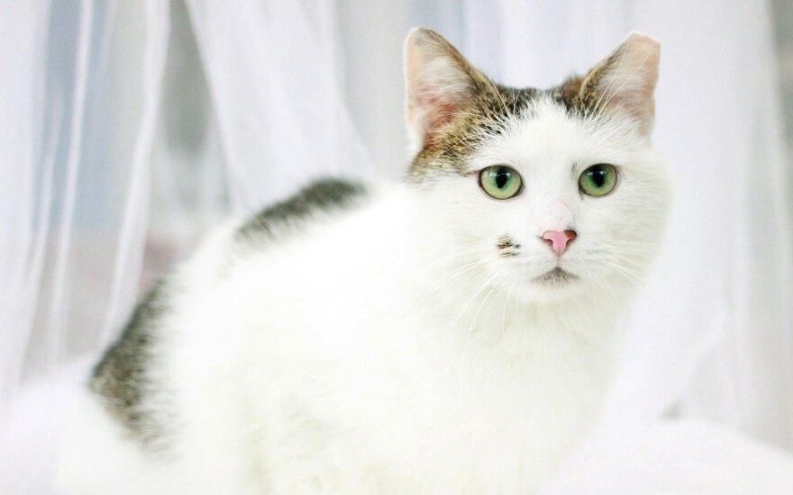 Mimi: katytė su apgamėliu