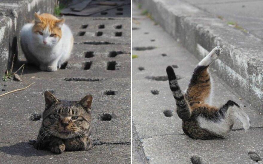 Benamės katės išdykauja nuotekų vamzdžių ertmėse