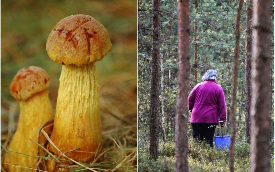 Invaziniai grybai Lietuvoje