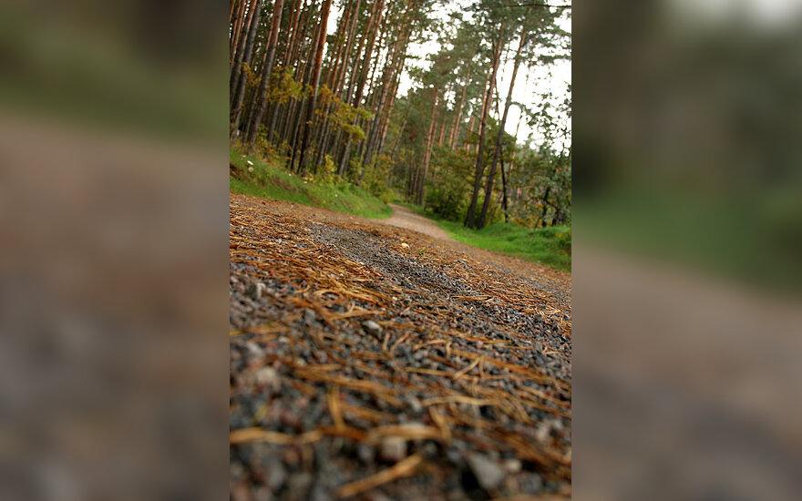 Miškas, medžiai, kelias