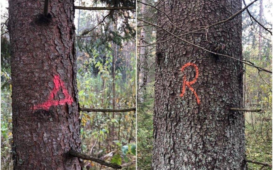 Medžių žymėjimas miške
