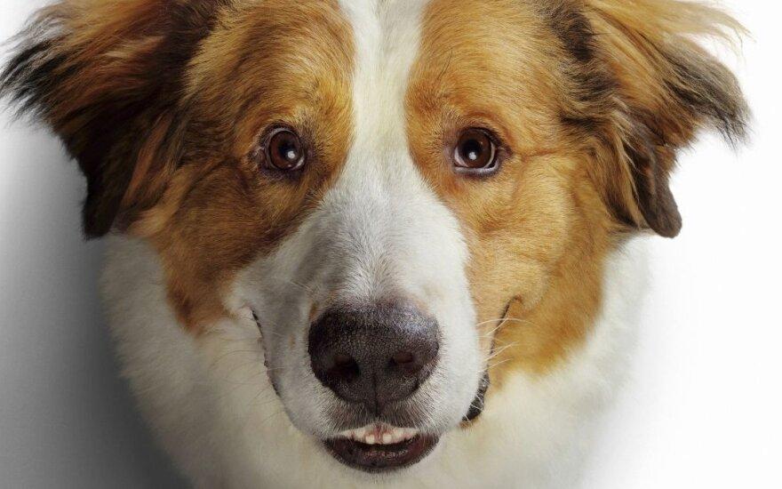 """Kadras iš filmo """"Šuns tikslas 2"""""""