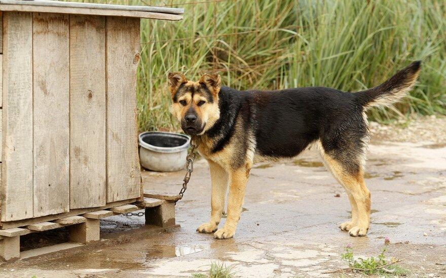 Šunų prieglauda