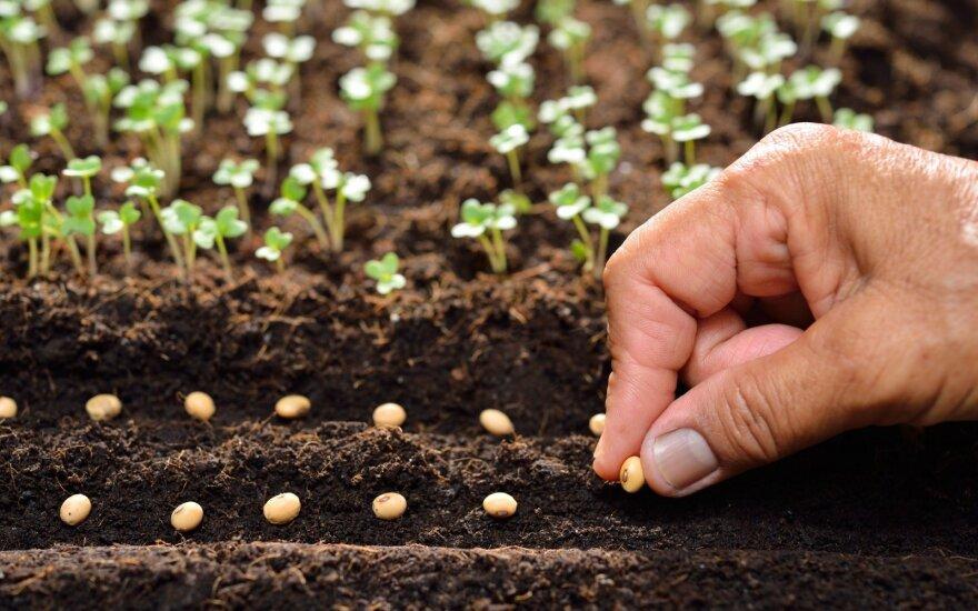 Kokius augalus galima sėti balandį ir gegužės pradžioje