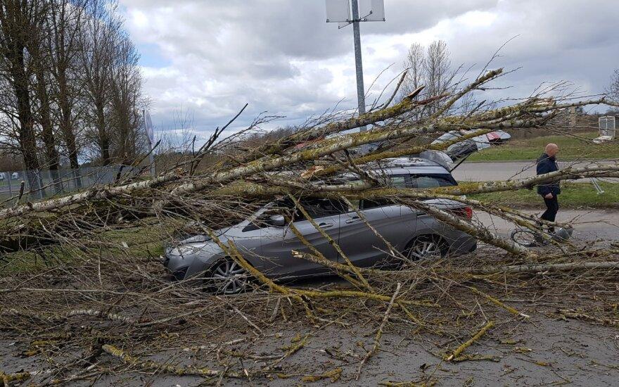 Vilniuje vėjo nuverstas medis sutraiškė užsieniečių išsinuomotą automobilį