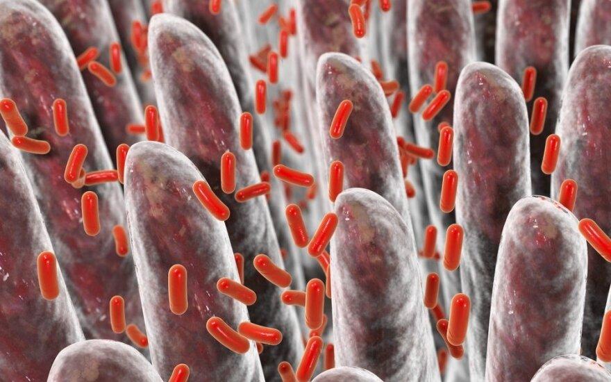 Ką reikia žinoti apie žarnyno mikrobiotą ir kodėl ji tokia svarbi