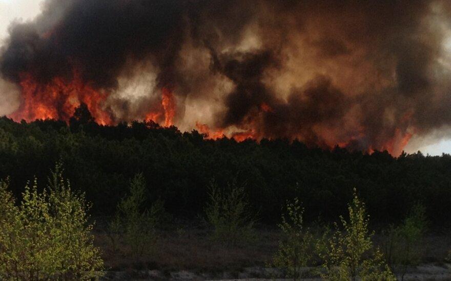 Dėl karščių dalis Lietuvos miškų atsidūrė ties pavojaus riba: miškininkai prašo nebekurti laužų
