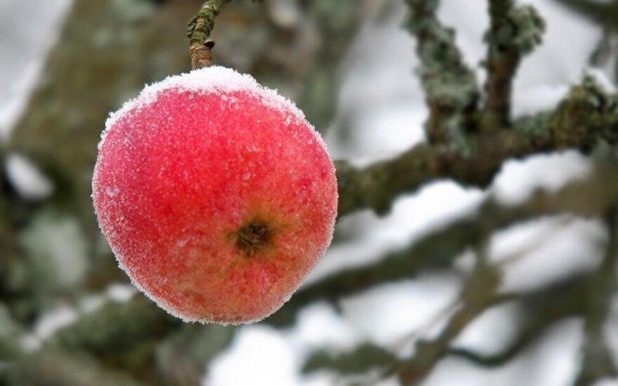 Paltanavičius: atrodo, kad tikros žiemos nesulauksime iki pat Kalėdų