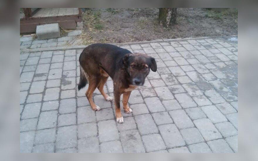 Išniekintas šuniukas Rokis: prašo padėti rasti skriaudėją ir prisidėti prie gydymo