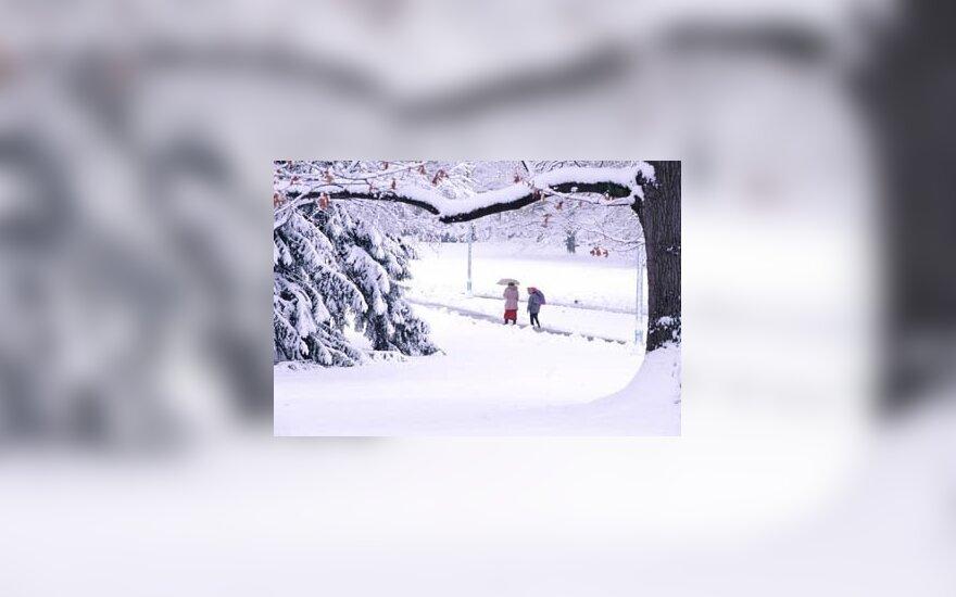 Miškininkai prognozuoja šaltą žiemą