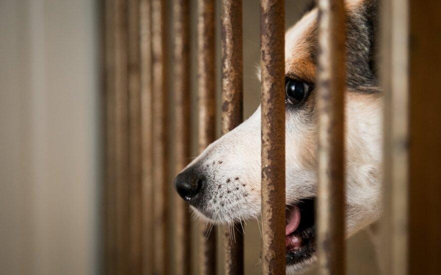 Gyvūnų prieglauda (asociatyvi nuotrauka)