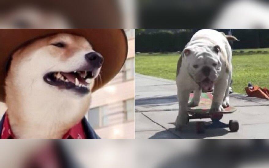 Keisčiausi šunys