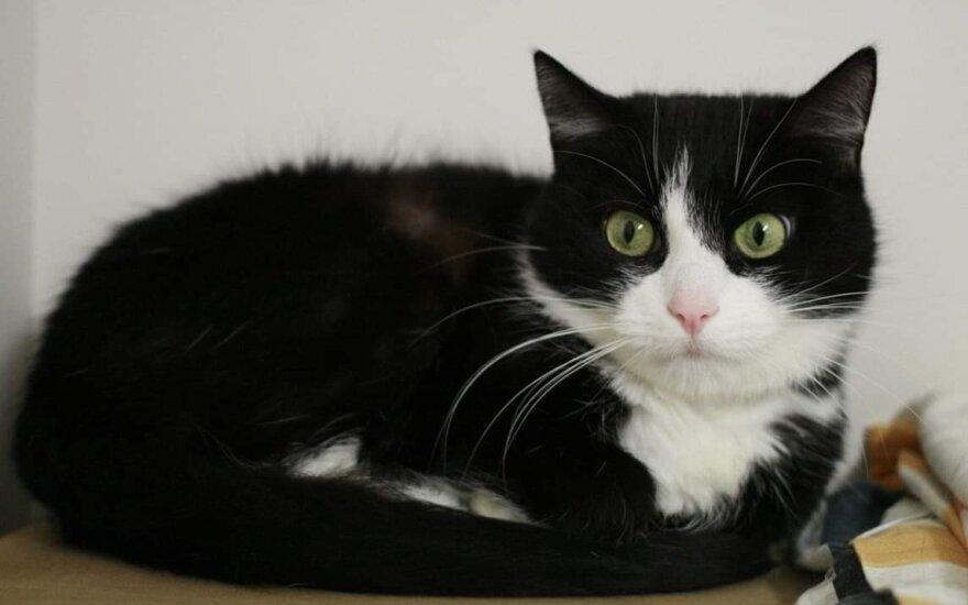 Išsigandusi katytė Spoksė buvo pasmerkta mirti: būtinai reikia namų