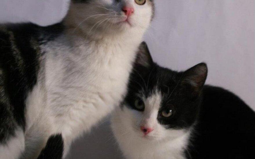 Kačiukai Merfis ir Ralfis ieško namų arba globos