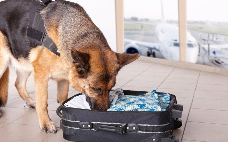 Šuo oro uoste