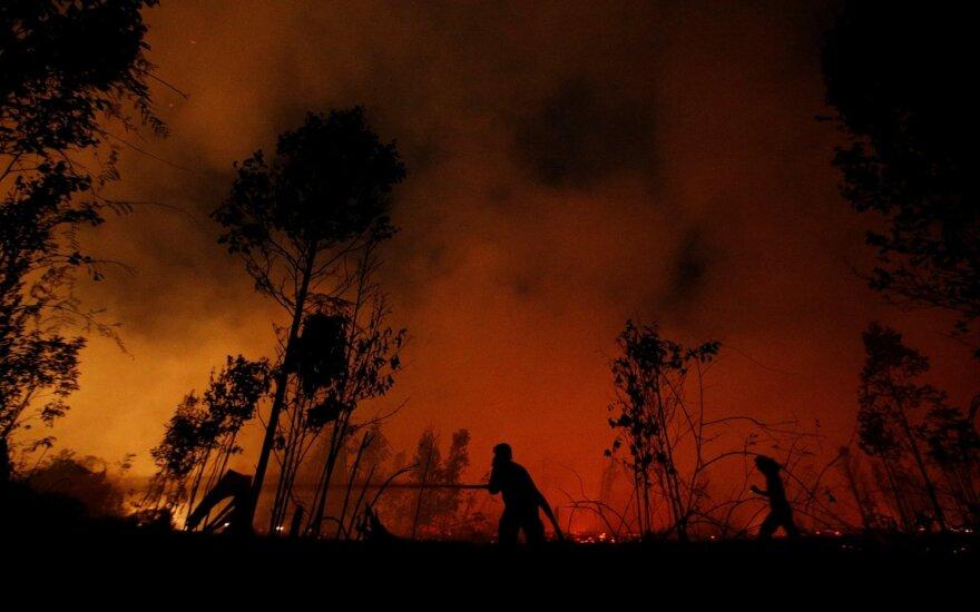 Miško gaisrai