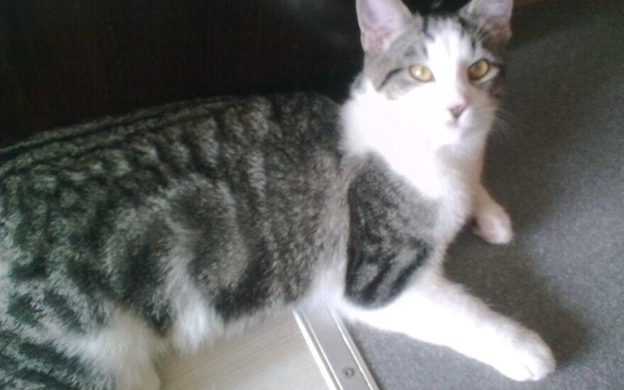 Žaismingam kačiukui Deniui ieškomi patikimi šeimininkai