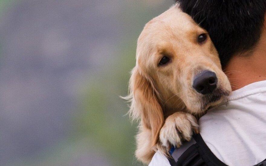 Šunį nušovęs ir miške išmetęs medžiotojas: norėjau, kad jį suėstų lapės