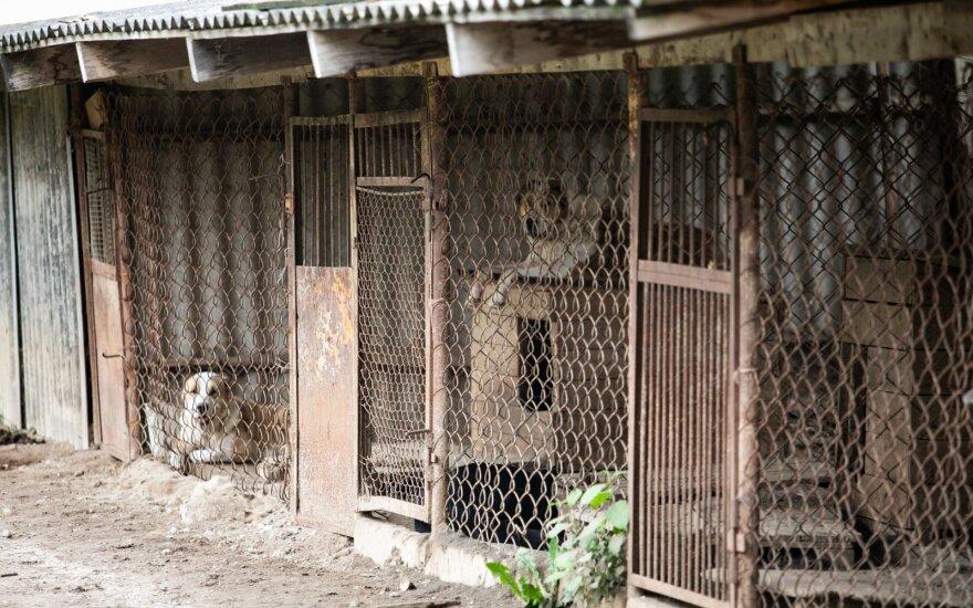Žemės ūkio ministerija žada dėl žiauraus elgesio su gyvūnais pradėti savo tyrimą