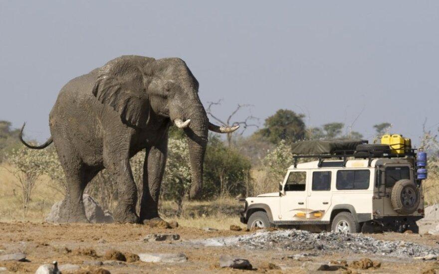 Botsvana, Afrika, turizmas, dramblys