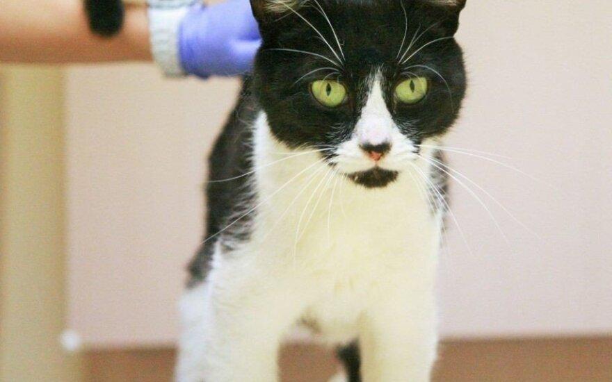 Reikia pagalbos: Šalčininkų r. dingo katinėlis