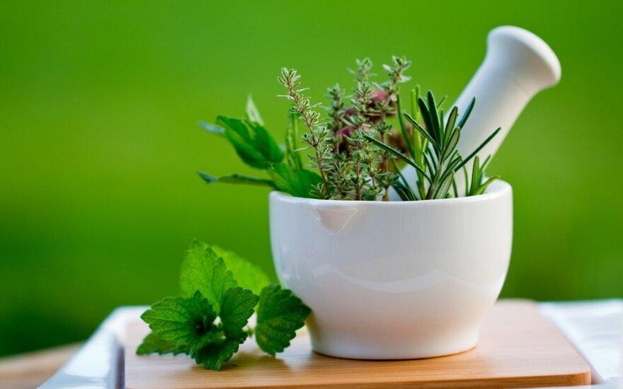 Populiariausių vaistažolių gidas: kada kokias rinkti ir naudoti