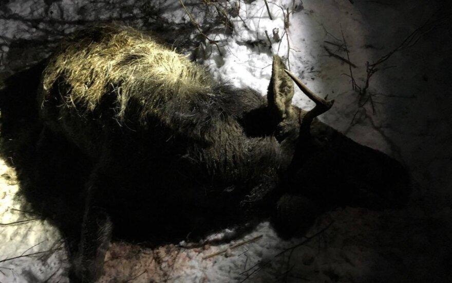 Medžiotojas nepaisė medžioklės taisyklių