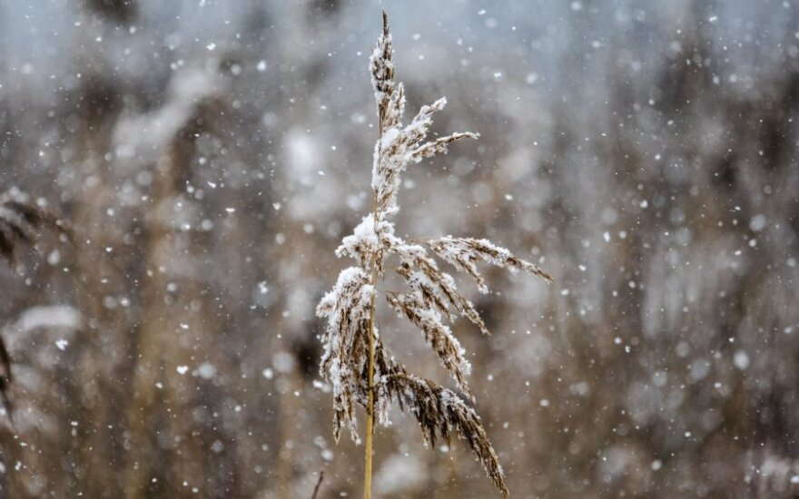 Orai: pavasario nesėkmės tęsis – ne tik šals, bet ir snigs