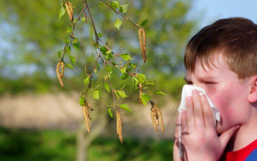 Specialistai įspėja: šiuo metu žydintys augalai iššaukia kai kurių maisto produktų netoliaravimą