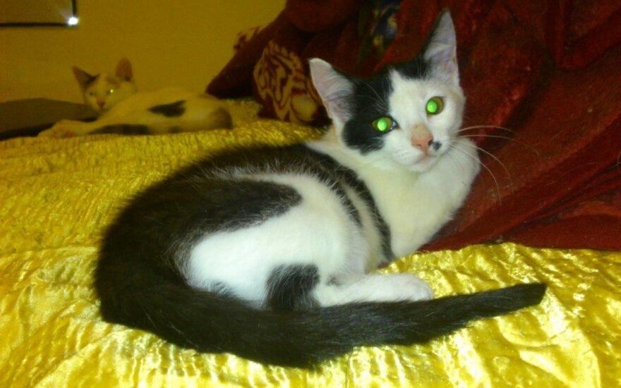 Nuostabi katytė išgelbėta iš gatvės nori turėti namus!