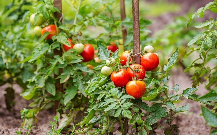 Patarimai, kuriuos dalija tobulai savo amatą išmanantys sodininkai