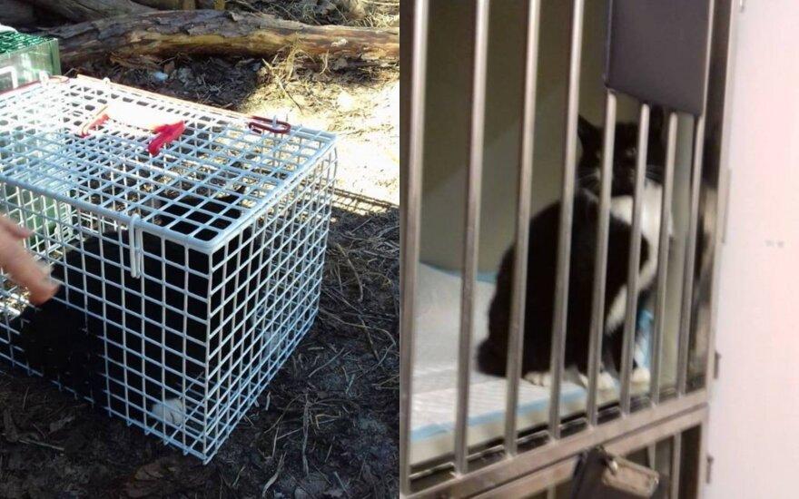 Padėkite padengti Vingio parko PSP kačių skolą veterinarijos klinikoje