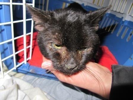 Padėkime katinėliui Biksui: reikia paramos ir globos