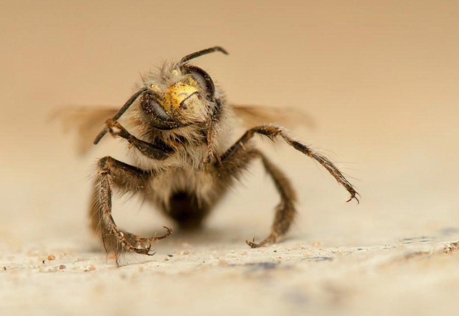 varpos bičių įgėlimas
