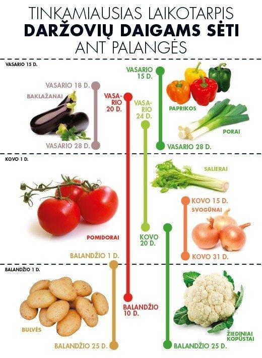 Daržovių daigų sodinimo kalendorius