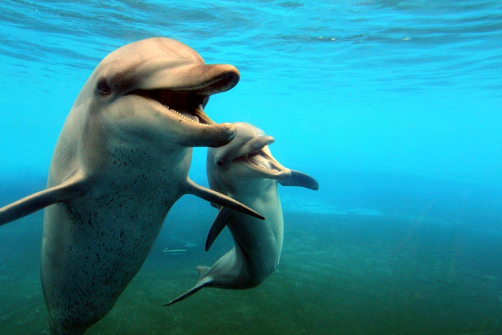 Детеныши дельфинов картинки