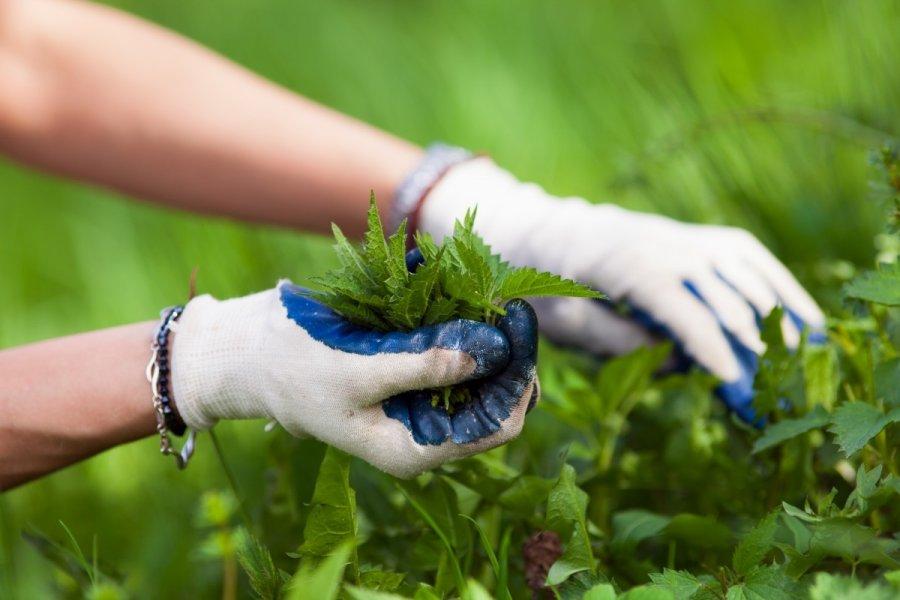 geriausia žolė širdies sveikatai