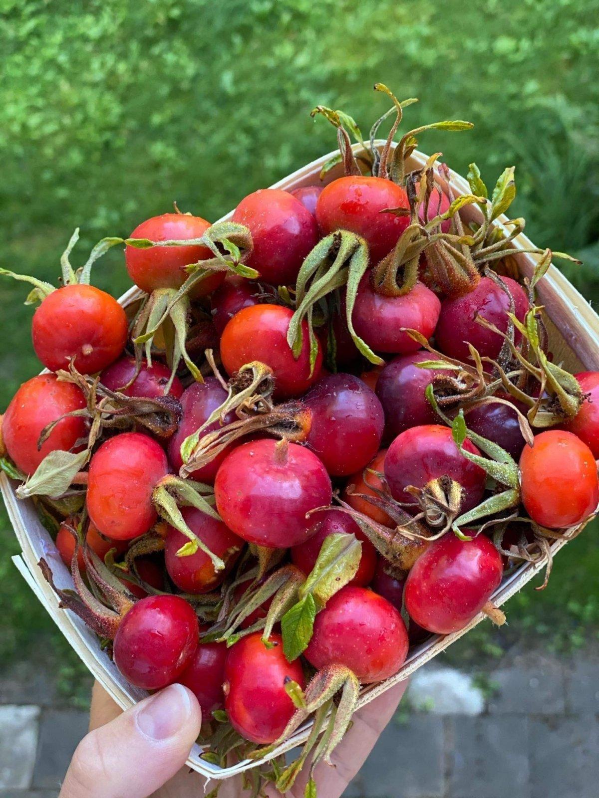 erškėtuogių vaisiai nuo hipertenzijos