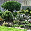 Kęstučio Ptakausko japoniškas sodas Alytuje_2