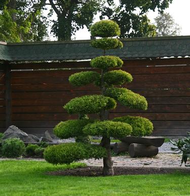 Kęstučio Ptakausko japoniškas sodas Alytuje_8