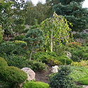 Kęstučio Ptakausko japoniškas sodas Alytuje_15