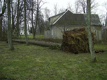 Vėtros išrautas medis Švėkšnos parke