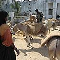 Lamu gyventojai