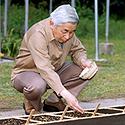 Japonijos imperatorius Akihito sėja ryžius
