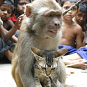 Beždžionėlės ir katino pasirodymas