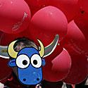 Protestuotojas prieš bėgimą su buliais