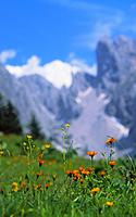 Austrija, kalnai