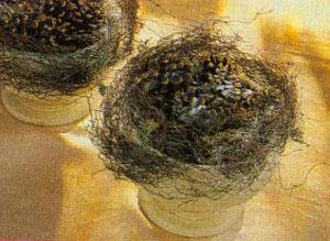 Siurprizas iš kankorėžių