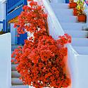 Gėlės, balkonas